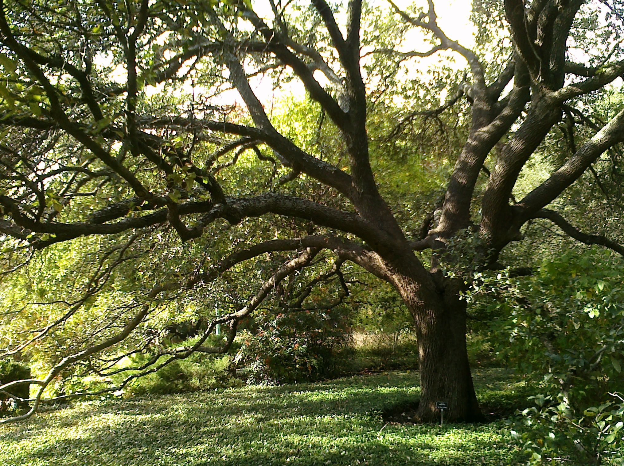Fort Worth Botanical Gardens My Someday Garden Pinterest