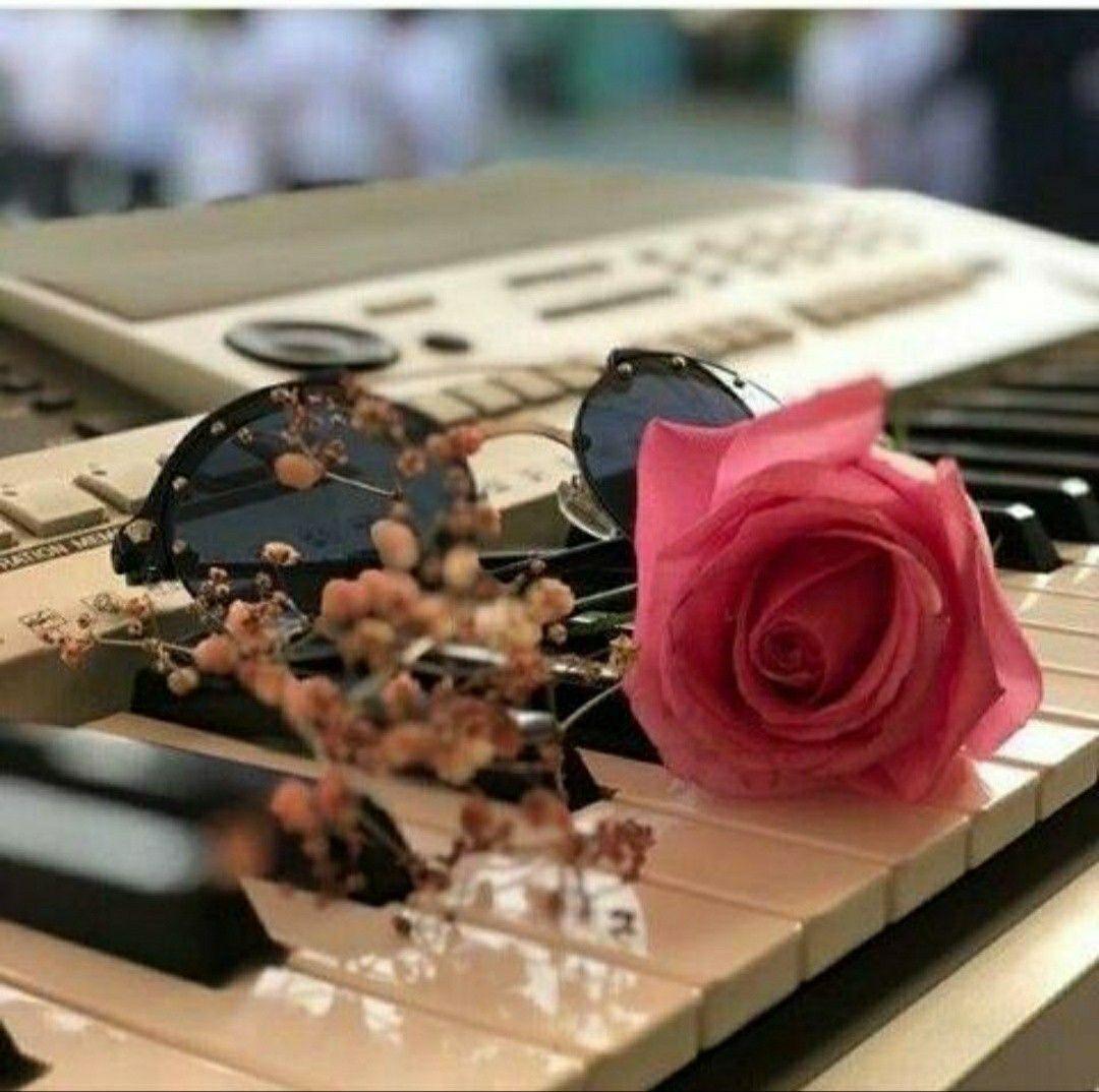 Malik Awesome Dpz Beautiful Roses Beautiful Flowers Love Flowers
