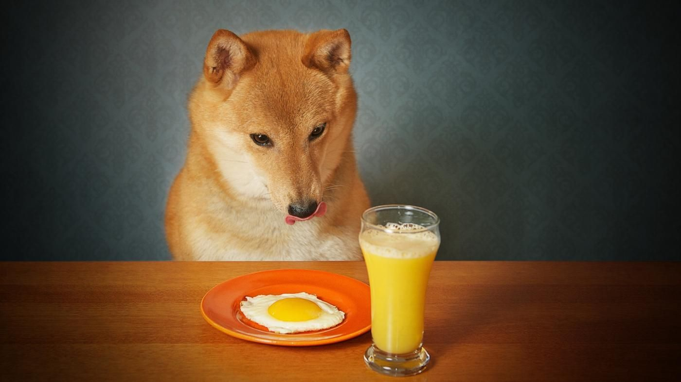 Can Dogs Eat Cooked Eggs Dangerous Foods For Dogs Dog Eating Human Food