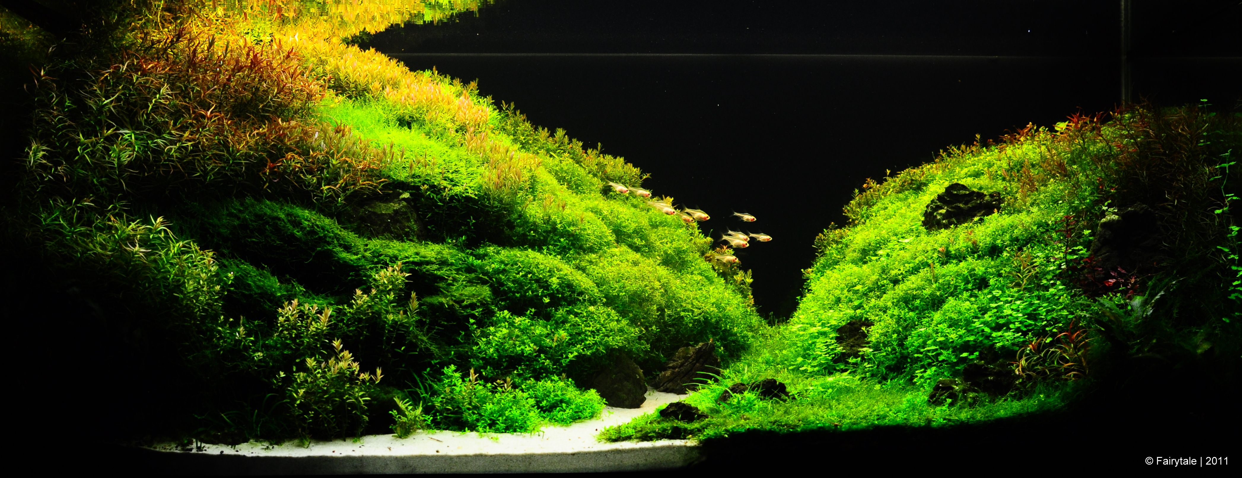 The International Aquatic Plants Layout Contest 2011   Acuario Rosa