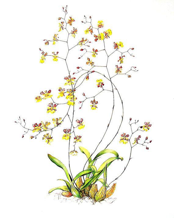Exotic Flower Print Oncidium Orchid By Mysunshinevintage