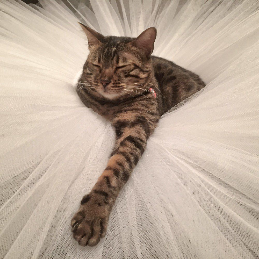 """NYC Dance Project """"capturing emotion through movement"""" - The family cat in a tutu"""
