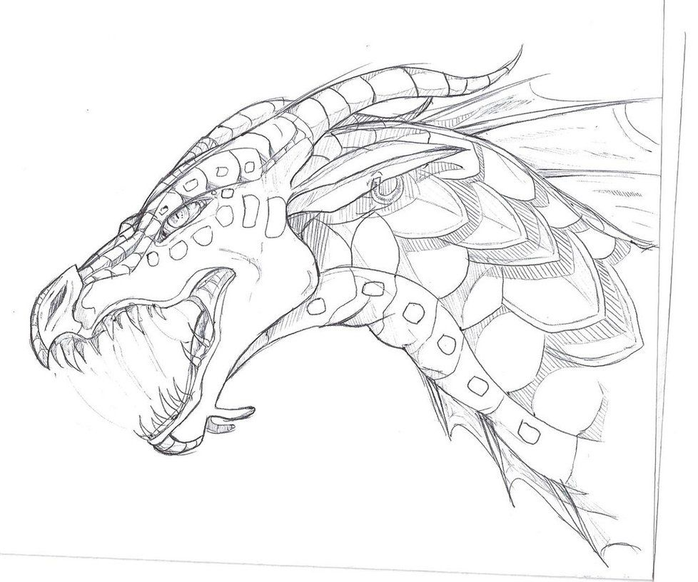 Seawing Sketch By Thelittlewaterdragon Deviantart Com On Deviantart Dragon Sketch Fire Art Wings Of Fire Dragons