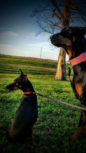 Sadie and Spike