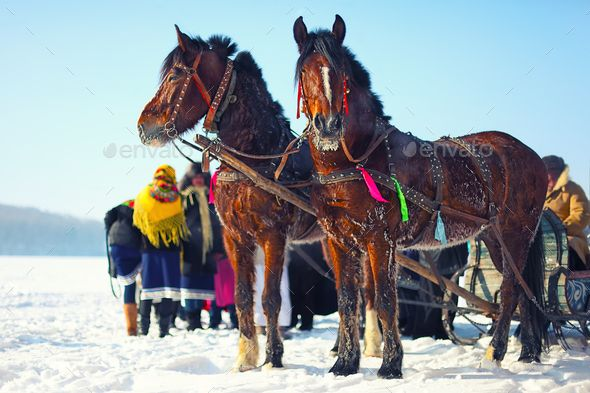Horses with sledges at the bank of frozen river in wintertime by Pilat666. Horses with sledges at the bank of frozen river in wintertime. Frosty weather