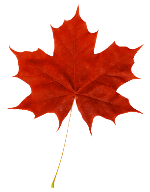 Red Maple Leaf Fall Pinterest Leaves Maple Leaf Drawing And