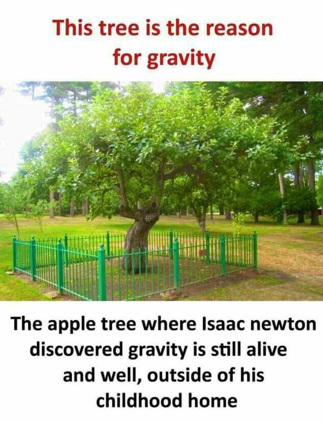 Yahi jagah saare fasad ki jad h...Kash Newton k opar Apple k bajaye Tree gir gaya hota kisa khatam xD