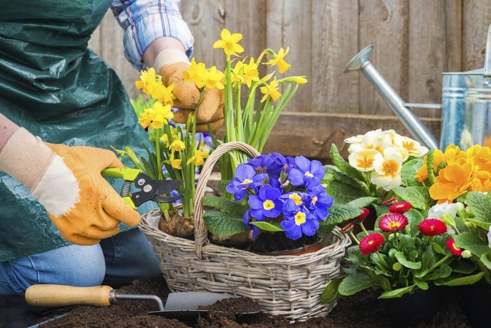 Rosliny Na Balkon Sadzenie Roslin Do Doniczek I Skrzynek Jak Prawidlowo Sadzic Kwiaty Balkonowe W Pojemnikach Plants Garden Home And Garden