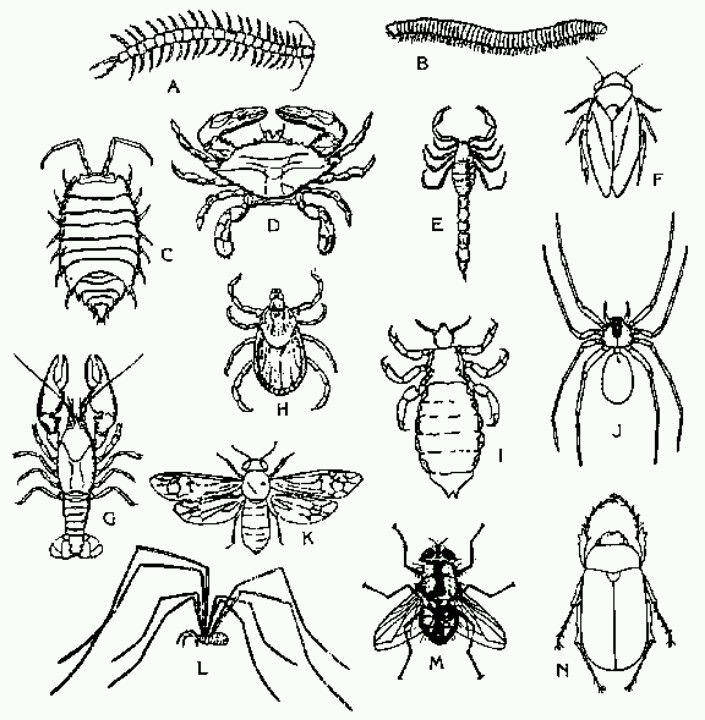 Insect Coloring Page Insect Coloring Pages Bugs Drawing Insects