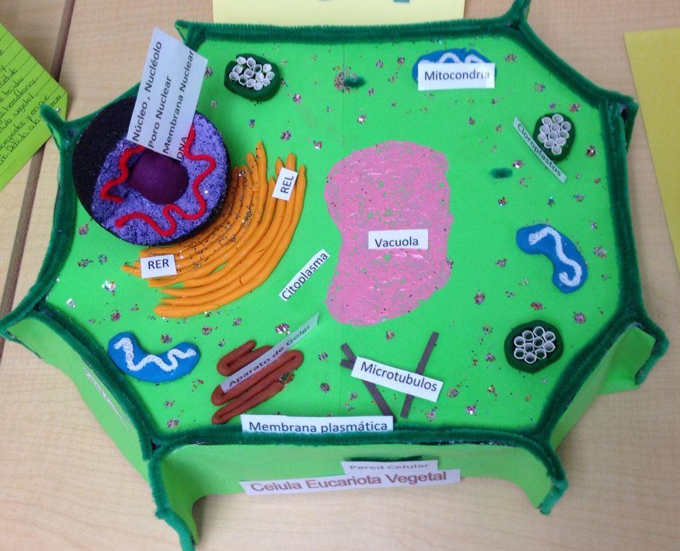 C lula vegetal c lula vegetal pinterest c lula for Pared y membrana celular