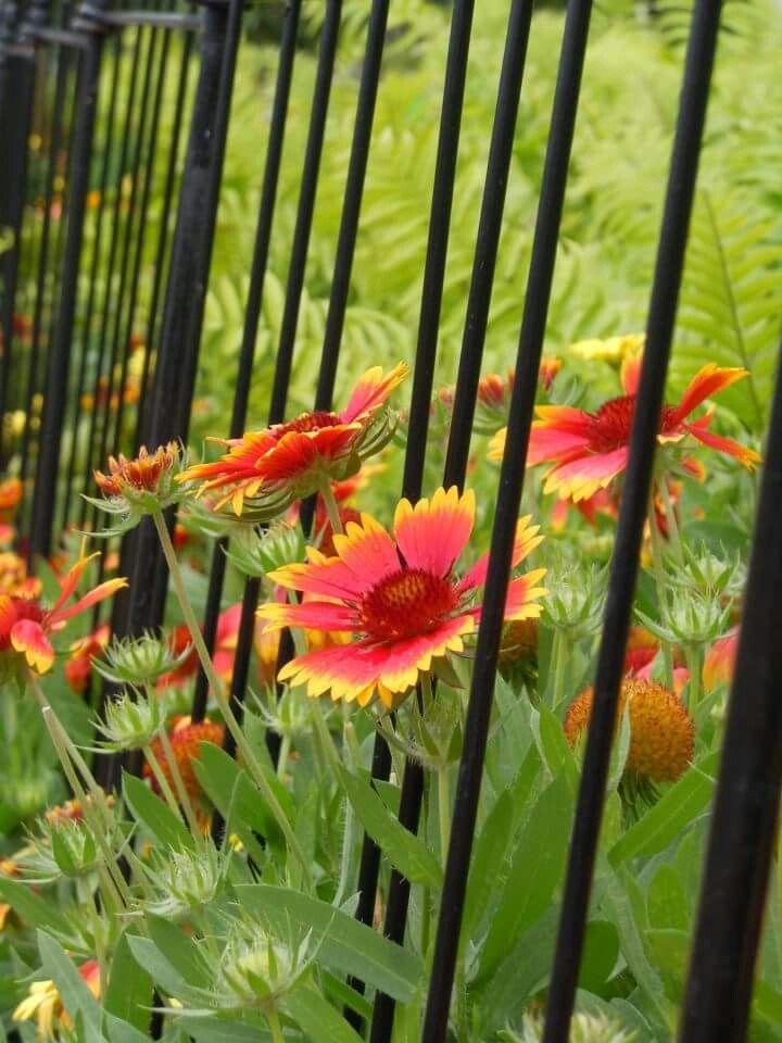 Disney flower and garden.
