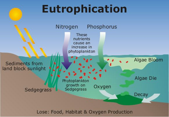 Eutrophication http05lovesgeographyspot201102 excessive richness of nutrients nitrogen and phosphate in a body of waterdue to runoff from the land which causes a dense growth of plant life algae ccuart Image collections
