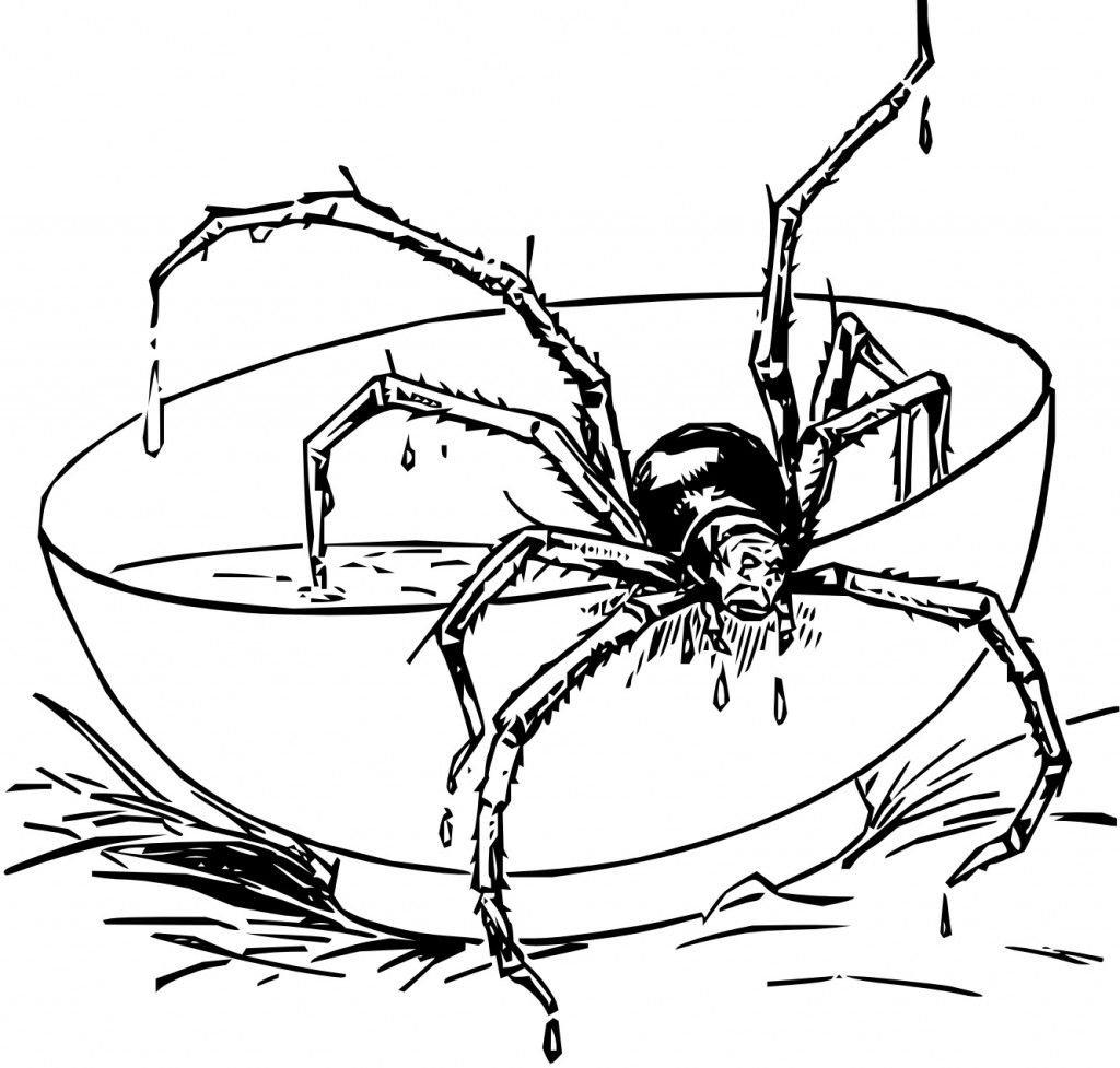 Free Printable Spider Coloring Pages For Kids Spider Coloring Page Kids Printable Coloring Pages Coloring Pages