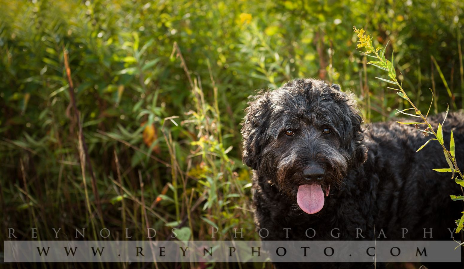 Pets Pets, Dog photography, Animal photo