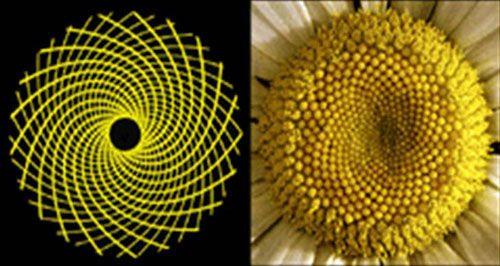 Fibonacci Spirals Clockwise And Counterclockwise Create Patterns