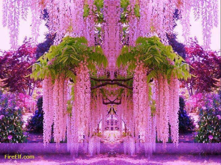 Wisteria Tunnel Japan Wisteria Island Of Honshu Japan Wisteria