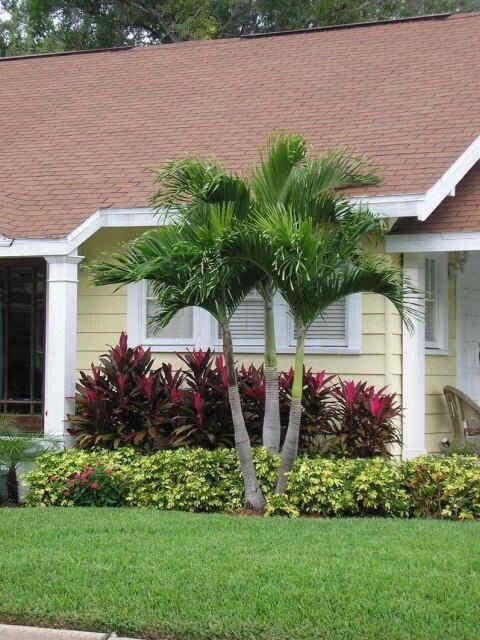 Palmeras albercas pinterest palmeras jardines y jard n for Palmeras pequenas para jardin