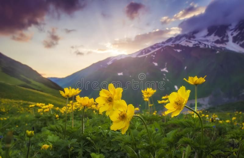 Landscape Of Beautiful Mountains At Sunset Yellow Flowers On Foreground On Moun Ad Flowers Yellow Mountain Beautiful Mountains Landscape Evening Sky
