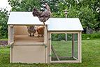 """""""All-American"""" Chicken Coop from My Pet Chicken"""
