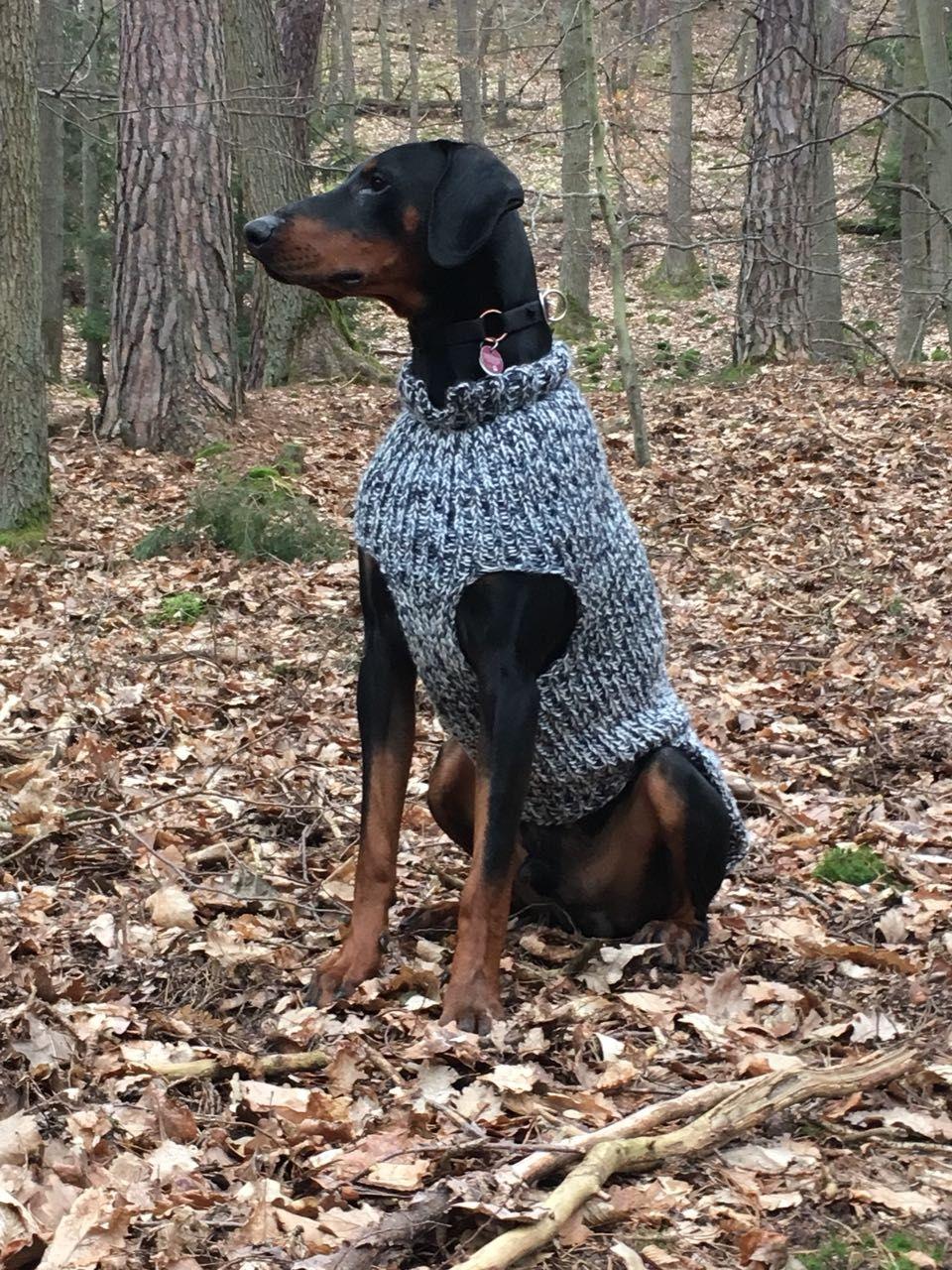 Hundepullover Fur Grosse Hunde Dobermann Hundepullover Pinterest