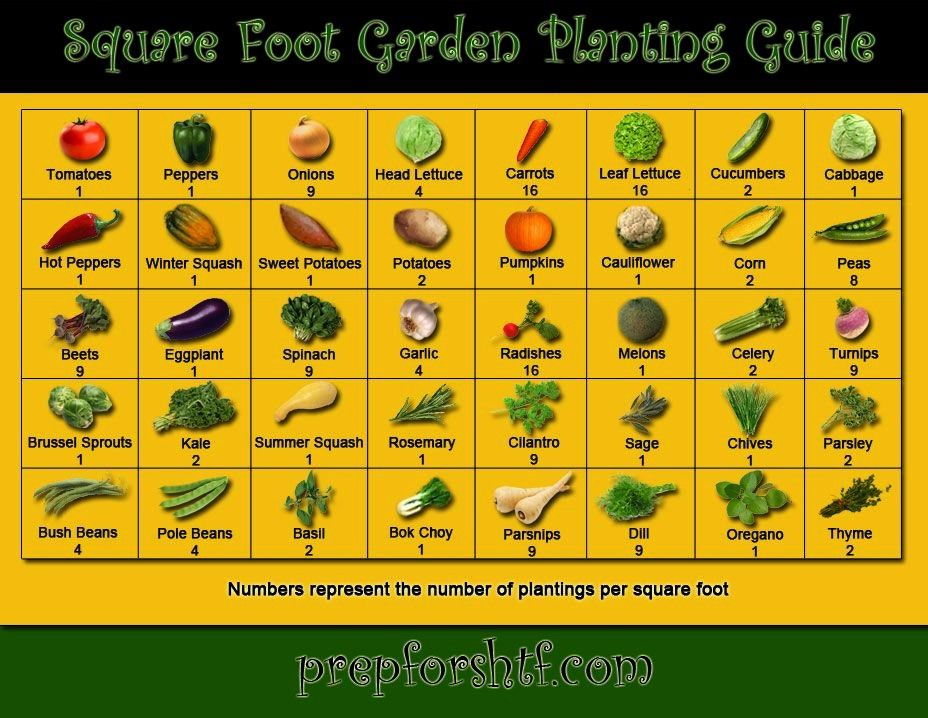 all plants require as much or as little space as others Plant the correct number of seeds in each square to maximize your garden while not harming the growth of each plan...