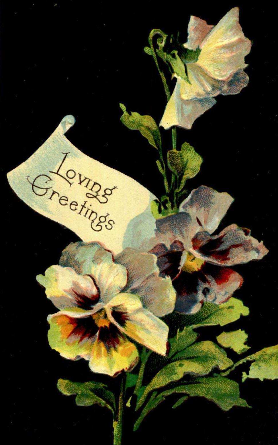 АНЮТИНЫ ГЛАЗКИ | Анютины глазки, Цветы, Картины