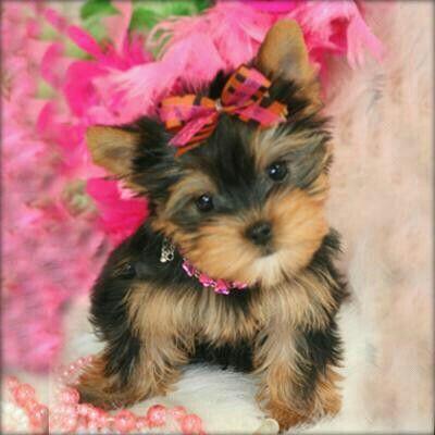 Pin En Cute Animals Pics And Gifs