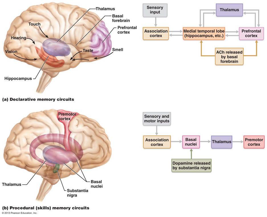 Deep throat centrial