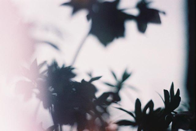 #フィルムに恋してる #indies_gram #reco_ig #phos_japan #フィルム写真普及委員会 #生活とフィルム #pics_jp #film_jp #thefilmcommunity #フィルム部 #フィルム写真撮ってる人と繋がりたい #ふぃるむ寫眞 #フィルムの灯を絶やさない #フィルム写真部 #indy_photolife #as_archive #Closeup_archive #hueart_life #photooftheday #photovogue #期限切れフィルム #キリトリセカイ #vague_memories #ファインダー越しの私の世界 #日々フィルム #filter365life #film_com #フィルムカメラに恋してる #オールドレンズ #単焦点