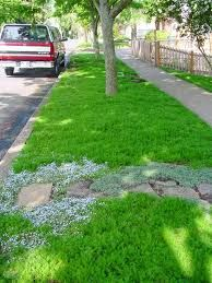 Corsican Mint Lawn Google Search Lawn Alternatives Ground Cover Plants Front Yard Landscaping