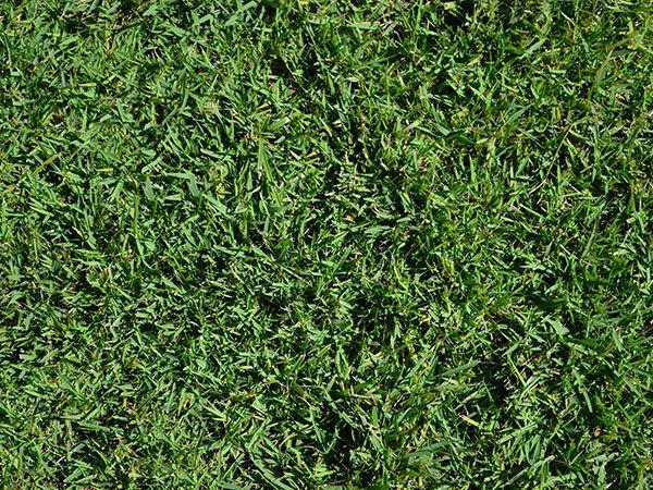 Super Seeds Perfect For Your Region Mondo Grass Dwarf Mondo Grass Zoysia Grass