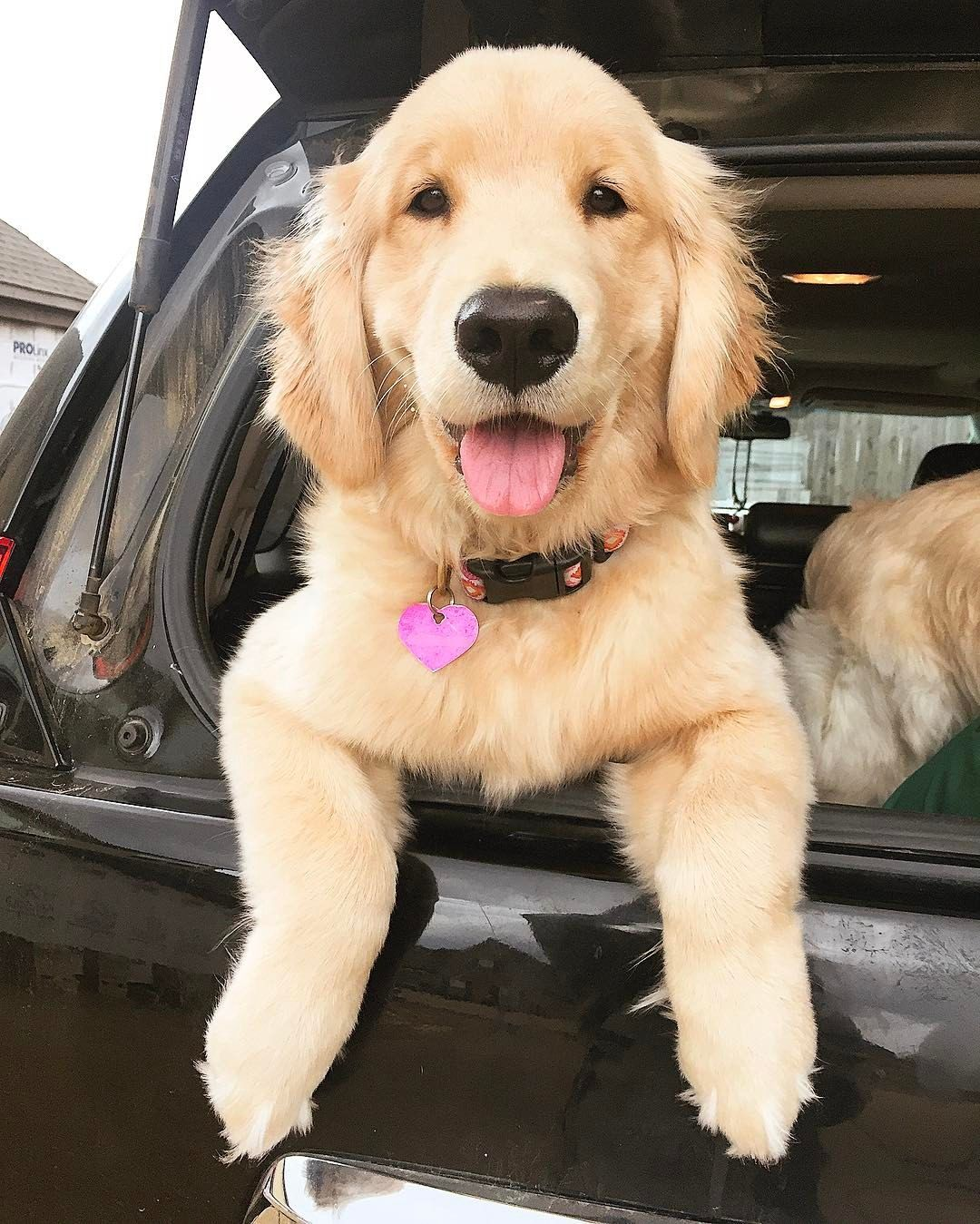 Ready to go I LOVE MY DOG Pinterest Dogs Pets and Puppies