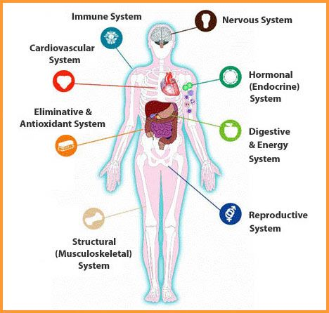 What Is Intra? Intra Helps To Support And Balance Your Bodyu0027s Eight Systems