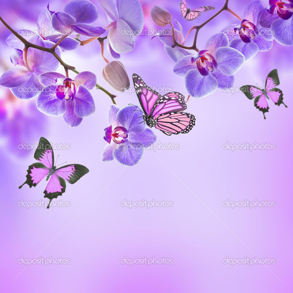 orchids and butterflies - Căutare Google