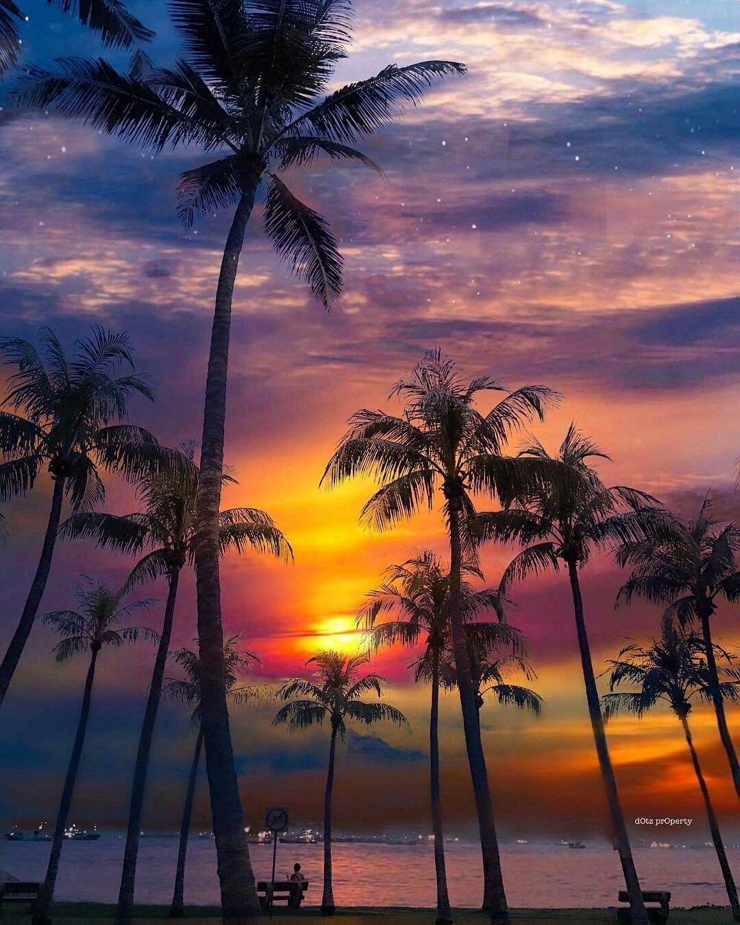 Palm trees Beautiful sunset, Nature pictures, Nature