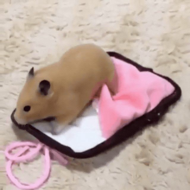 Sleeping Bag Hamster X Post R Eyebleach Ift