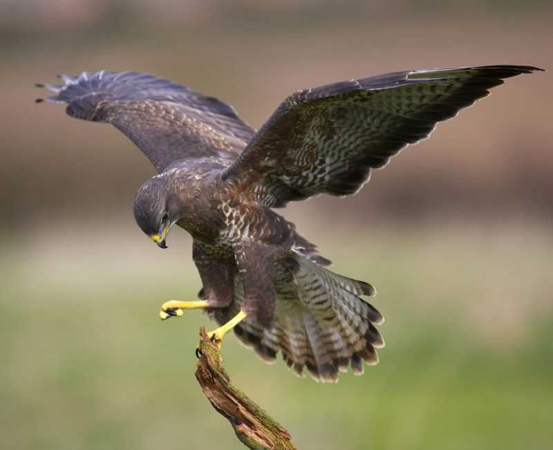 A falcon, towering in her pride of place, Was by a mousing owl hawked at and killed. (2.4.12) The death of Duncan was planned the old man believes. He says there are spies looking out for anyone to kill that might try to harm them.
