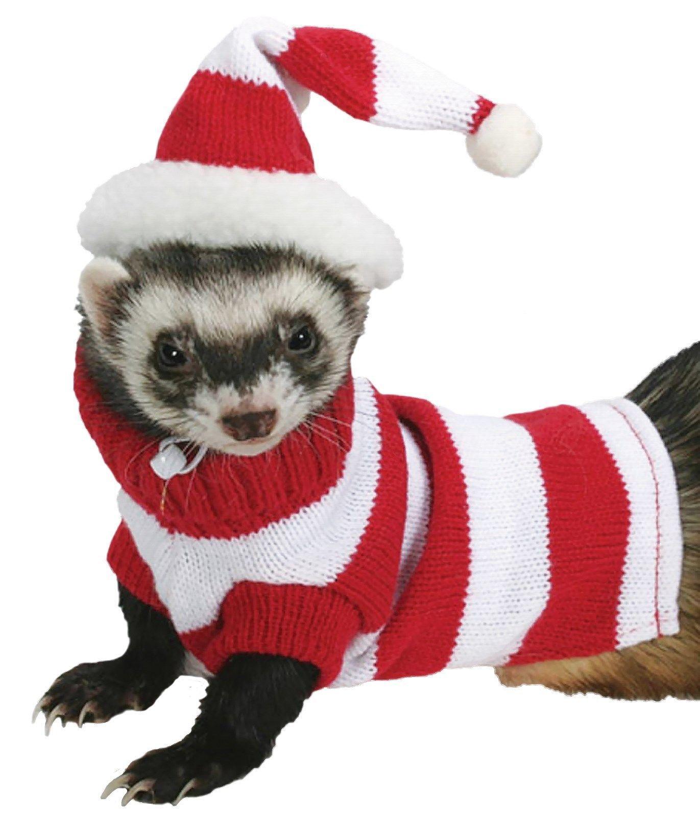 11 03 Marshall Pet Ferret Tiny Dog Jacket Hat Sweater Set 3 5 Lbs Red White Stripe Ebay Home Garden Pet Ferret Ferret Ferret Clothes
