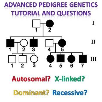 pedigree genetics advanced pedigree tutorial and question packet pinterest genetics. Black Bedroom Furniture Sets. Home Design Ideas