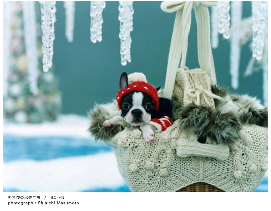 To grandmother's house I go! ♡♥♡ Pet Photography | Dog | Fun photo session Ideas | Props | Portraits | Holiday Card Ideas | Christmas | Boston Terrier Puppy