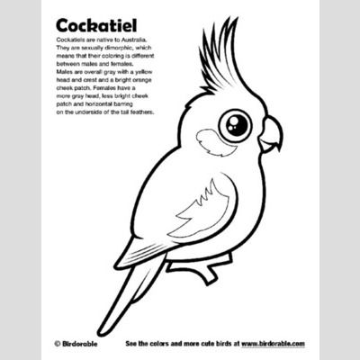 Cockatiel Coloring Page Sample Bird Coloring Pages Coloring