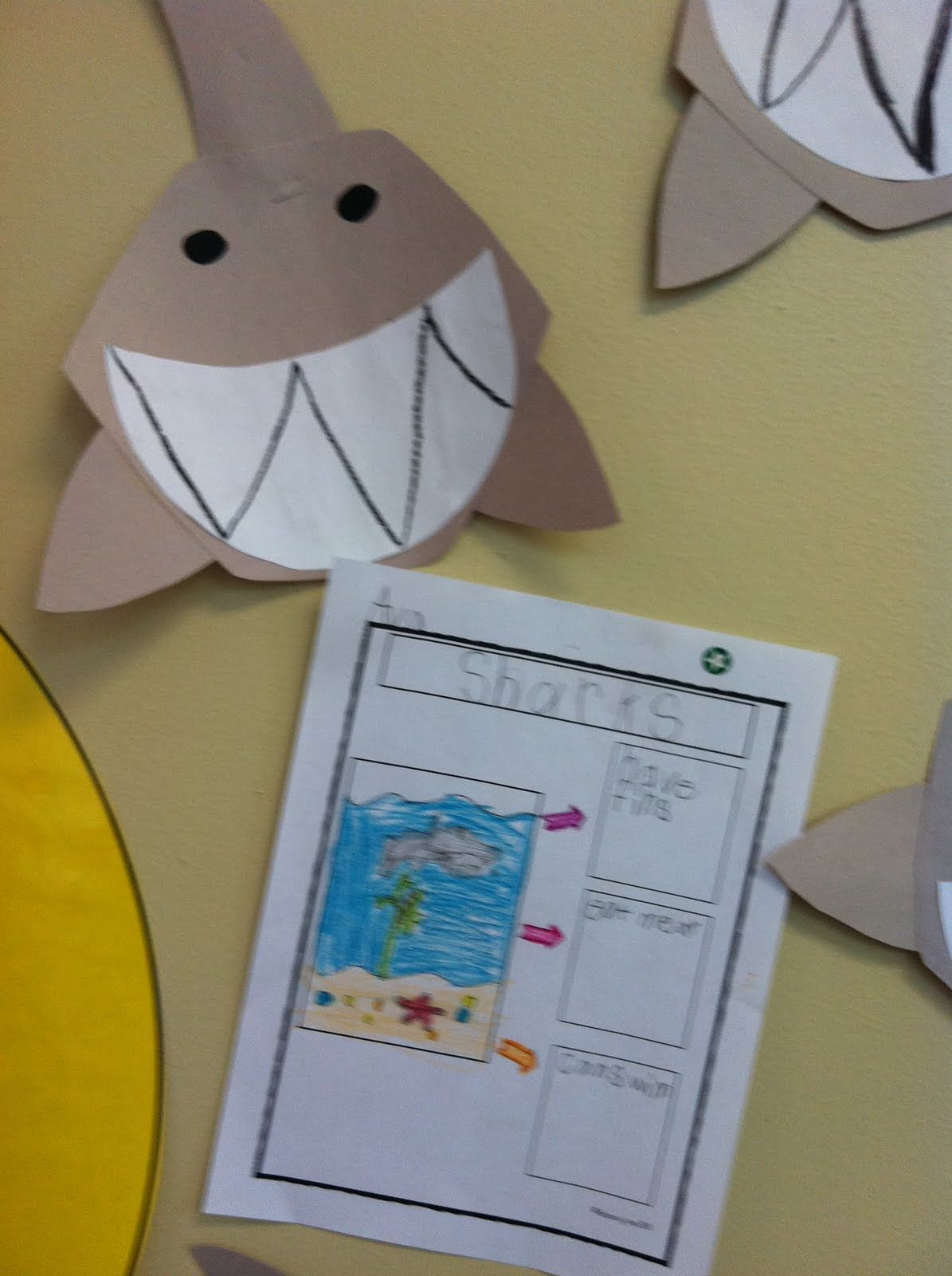 Welcome To Room 36 Ocean Animals
