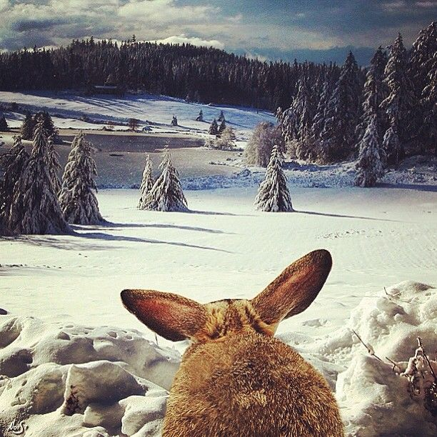 #fromwhattheysee rabbit edition  - @nois7- #webstagram