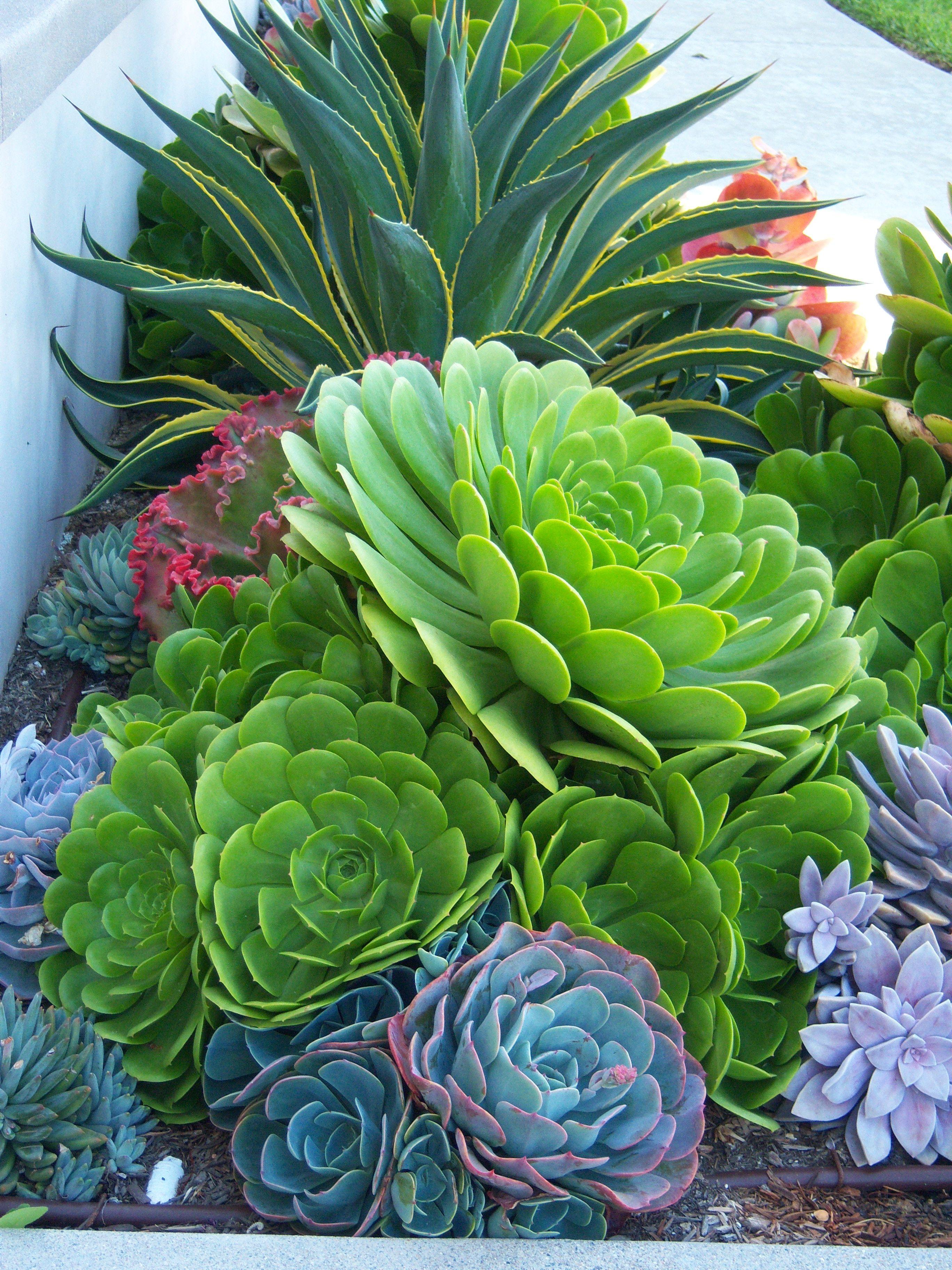 CA Friendly Http://rogersgardenslandscape.com
