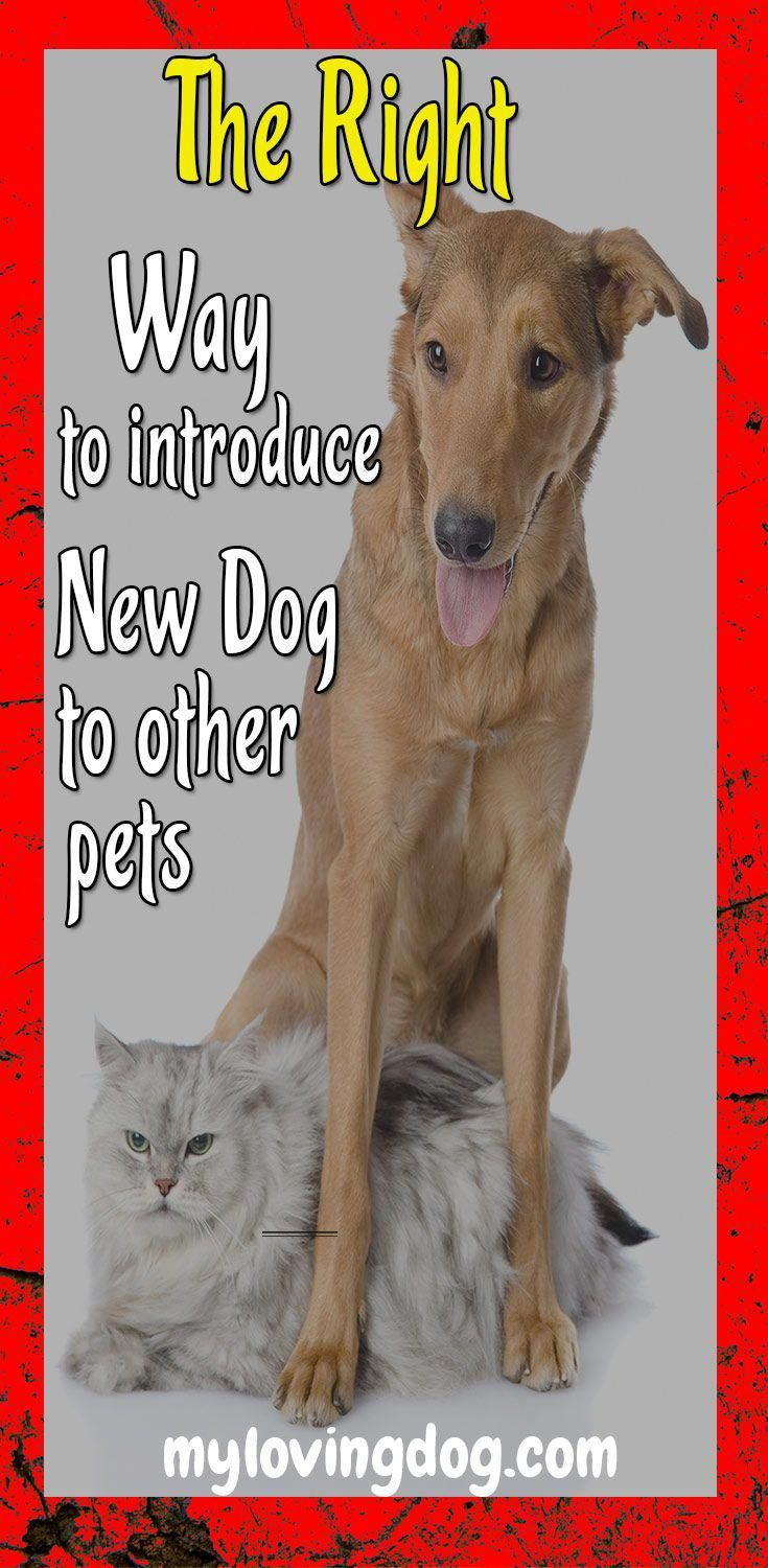 how to introduce a cat to a dog Whether you already have