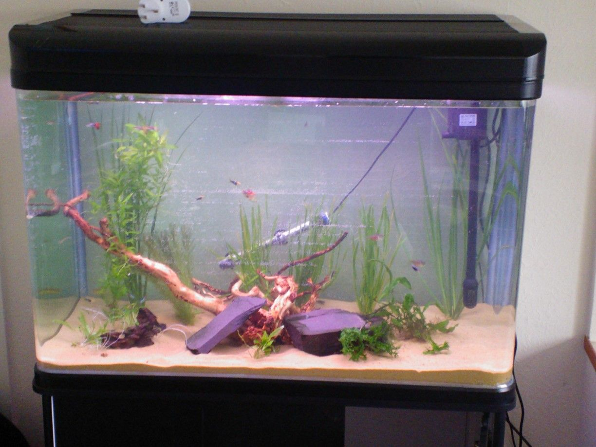 Tropical freshwater aquarium fish uk - David S 100cm Height Added Cabinet Tank From All Pond Solutions Http Www
