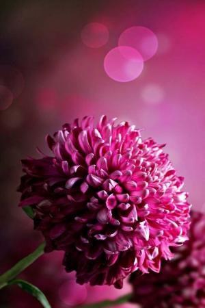 By Asmodel Amazing Flowers Purple Flowers Wallpaper Purple Flowers
