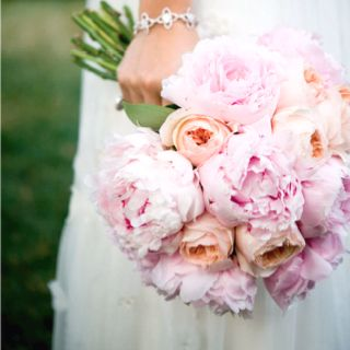and then there are peonies...