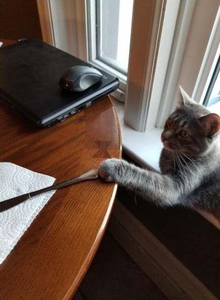 Memes Cat Knife 43 Trendy Ideas | Cat memes, Cats, Cat ...