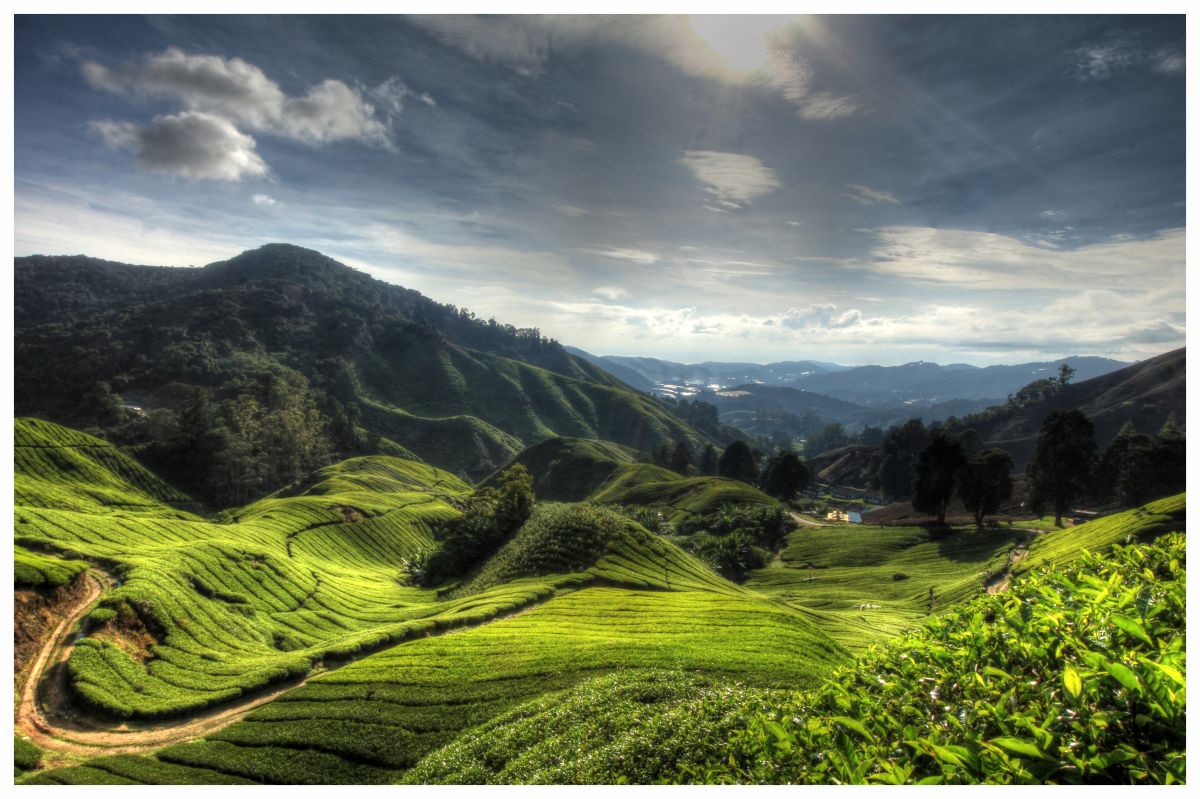 The tea fields in cameron highlands. The scenery here is breathtakingly beautiful